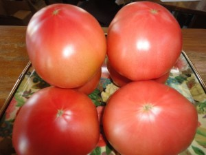実が詰まって少し酸味のある美味しいトマト