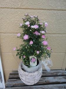 母の日に子供から貰ったバラの花