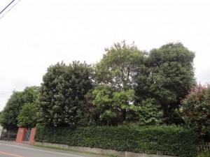 夏対策にもなる広葉樹