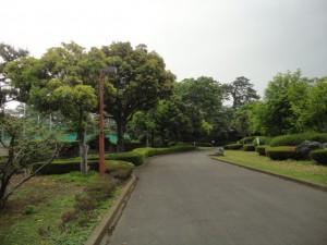 緑豊かな公園内