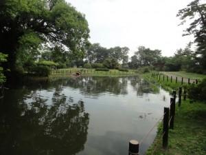 気持ち良い水生公園