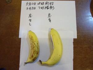 液状炭塗布の箱にバナナを入れて実験