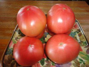 太陽の恵みを受けて採れたトマト
