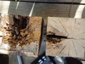 腐蝕していた柱の木口