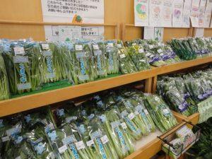 新鮮な葉物野菜